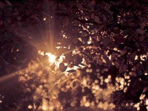 Autumn-Sun